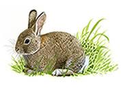 rabbit_180_tcm9-60439