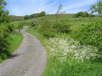 Country_Lanes_-_geograph.org.uk_-_172636